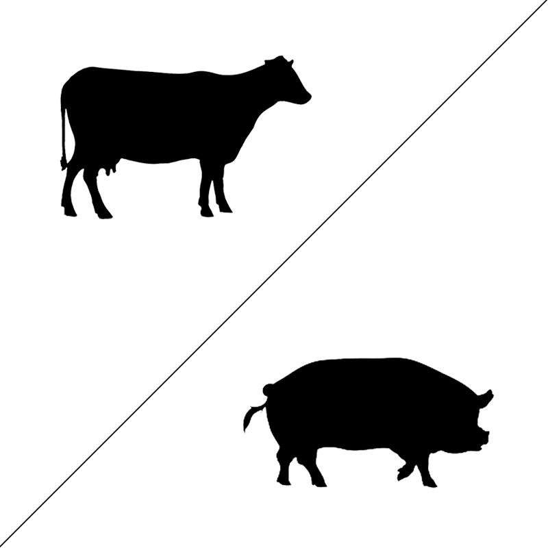 Vleespakket koe en varken
